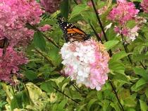 LBD_butterfly